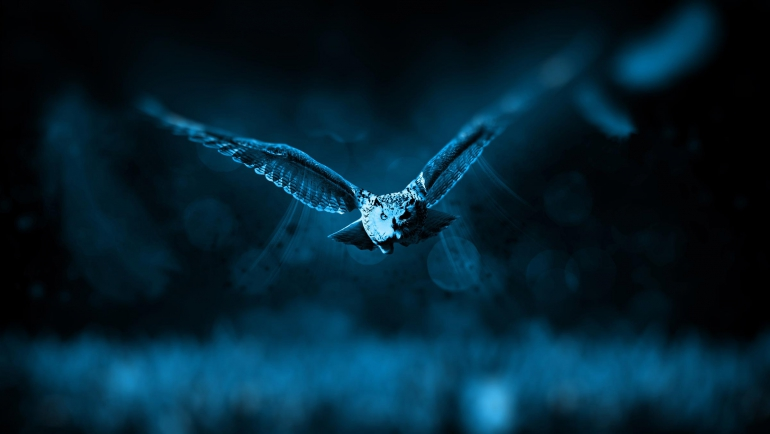 انتخاب آرم مجیک بوف با الهام از موجودی اسرارآمیز به نام جغد